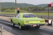 Green Roadrunner