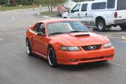 Orang Mustang
